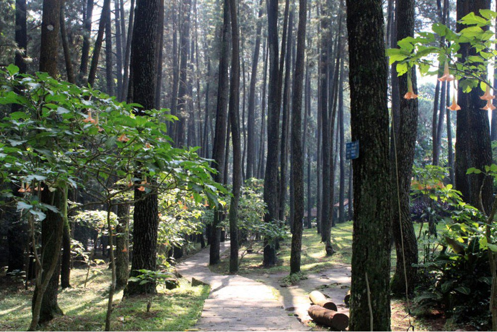things to do in bandung juanda forest park
