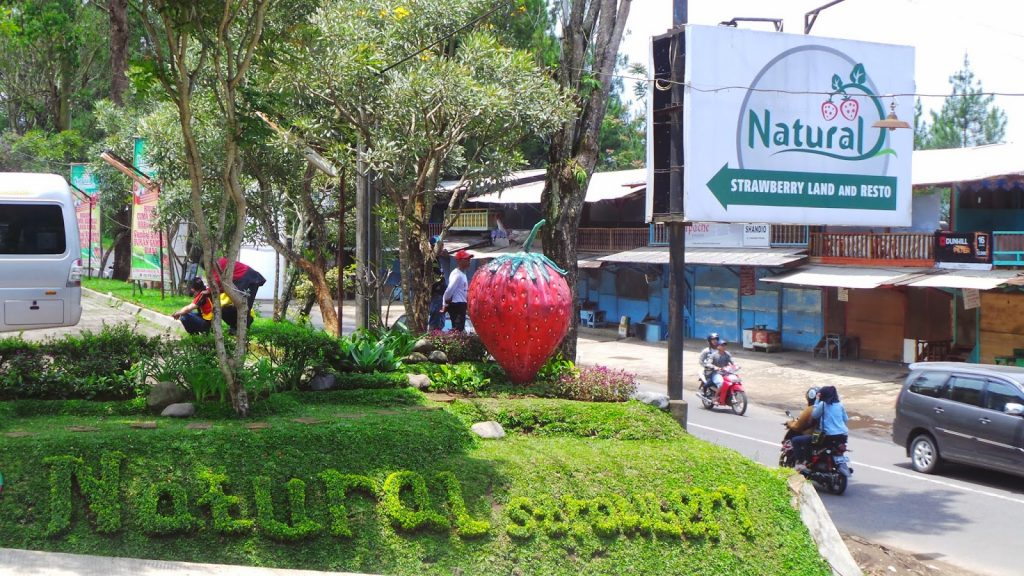 things to do in Bandung natural strawberry farm
